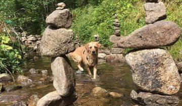 Camping de Belle Hutte-chien dans la rivière-Les Pieds dans l'Eau