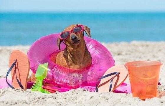 Vacances en campingavec votre chien